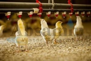تصفیه آب در مرغداری