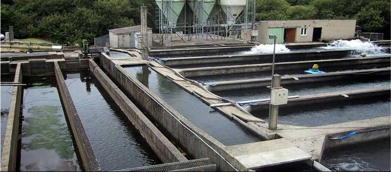 تصفیه آب در پرورش ماهی