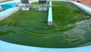 تصفیه زیستی فاضلاب با استفاده از میکروجلبک کلرلا ولگاریس