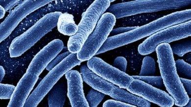 کشف میکروب آهن خوار: راهی جدید برای تصفیه زیستی پساب