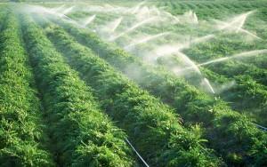 بازیابی مواد مغذی از پساب های زراعی