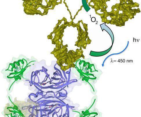 تصفیه ی آب با استفاده از پروتئین ها